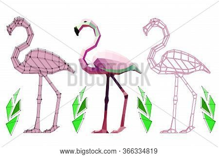 Three Low Poly Flamingos With Plants: Flamingo With Points, Flamingo In Colour And Graphic, Vector G