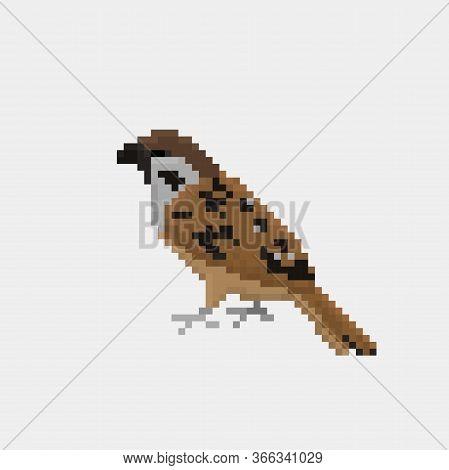Vector Pixel Art Sparrow Action Isolated Cartoon