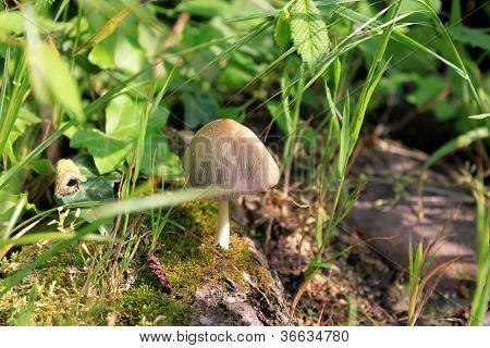 grey mashroom inside grass