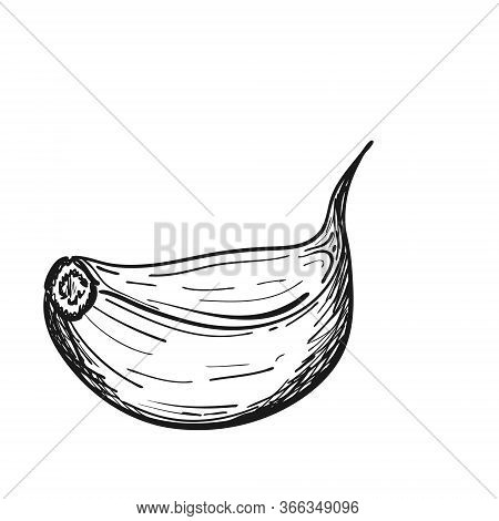 Garlic Clove In Doodle Style. The Vegetable Is Drawn By Hand And Isolated On A White Background. Bla