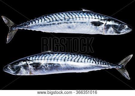 Mackerel Fish Isolated On Black Background. Frozen Fish. Iced Atlantic Fish. Mackerel. Mackerel Patt