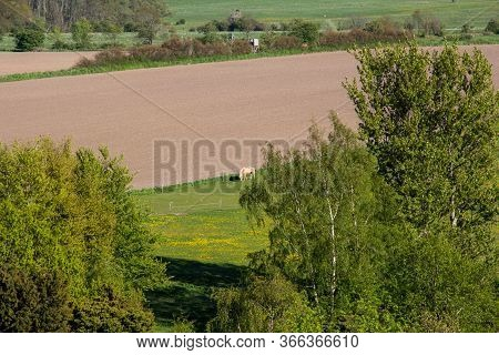 A Single Lonely Horse Is Slowly Eating The Grass In A Pasture Next To An Unused Farmland In Southern