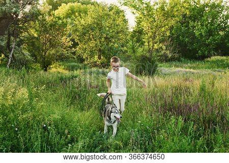 Children\'s Day. Happy Little Child Boy Having Fun With Dog Pet Husky On Field. Summer Walk. Childho