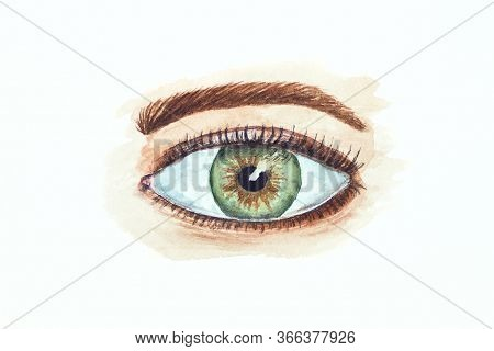 Watercolor Drawing Of The Eye Isolated On White Background. Illustration Of Green And Gray Eye