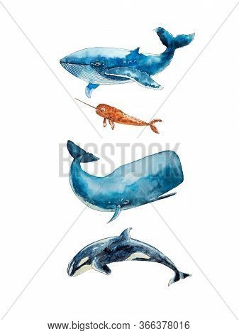 Watercolor Drawing Of Four Whales Isolated On The White Background. Illustration Of Oceanic. Set Of