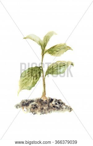 Watercolor Drawing Of The Sprout Isolated On The White Background. Illustration Of The Green Sprout