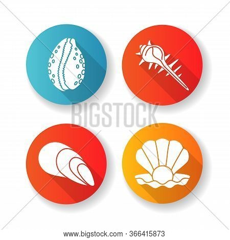 Different Sea Shells Flat Design Long Shadow Glyph Icons Set. Seashells Collection, Conchology Open