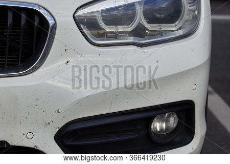 Midges Insects On The Bumper And Hood Of The Car