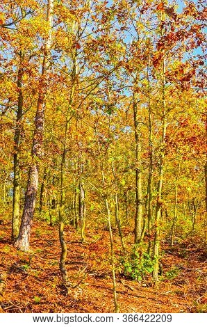 Beautiful Autumn Forest With Colorful Fall Trees. Foliage In Golden, Yellow And Orange Colors. Autum