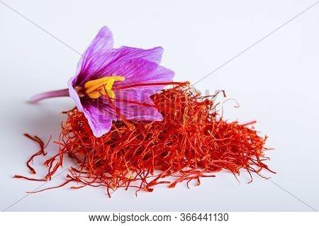 Fresh Saffron Flower On A Pile Of Saffron Threads On A White Background.