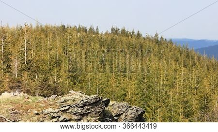 Trees In A Forrest On The Top Of A Mountain With A Rock In The Foreground During A Sunny Day, Sokoli