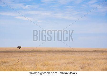 Serengeti National Park Landscape, Tanzania, Africa