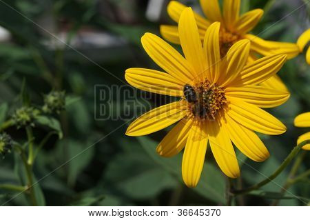 The bee on a flower