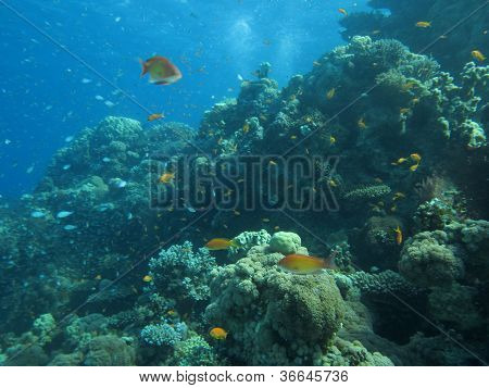 underwater scenery on coral Gulf of Eilat Red Sea poster