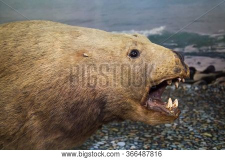 Portrait Of A Sea Lion (eumetopias Jubatus) With A Large Mouth On The Background Of Sea Waves, Stuff