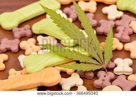 Cbd Cannabidiol And Medical Marijuana Treat For Pets, Food Delicacy For Dogs And Cats With A Green L