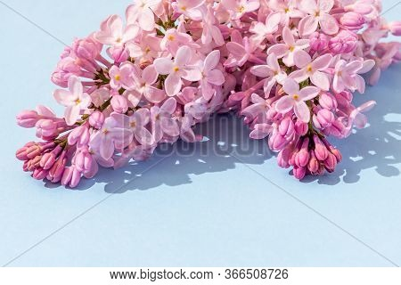 Branches Of A Blossoming Lilac On A Blue Background