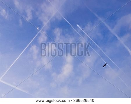 Many Condensation, Inversion, Jet Tracks Of Moving Aircraft, Together With The Moon And A Bird In Th