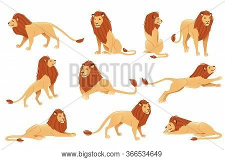 Set Of Male Proud Powerful Cute Lion Character Cartoon Style Animal Design Flat Vector Illustration