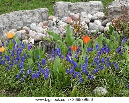 Different Colorful Flowers On The Flower Bed