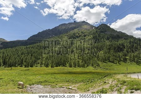 San Pellegrino Pass, Moena, Trentino Alto Adige, Alps, Dolomites, Italy: Landscape At The San Pelleg