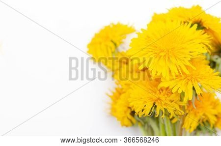 Bouquet Of Yellow Dandelions On A White Background. Yellow Summer Flowers.