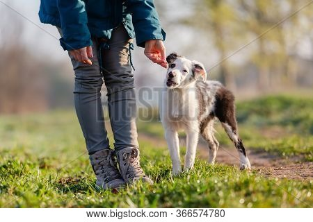 Woman Giving A Puppy A Treat
