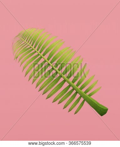 Palm Frond On Pastel Color Background,3d Rendering