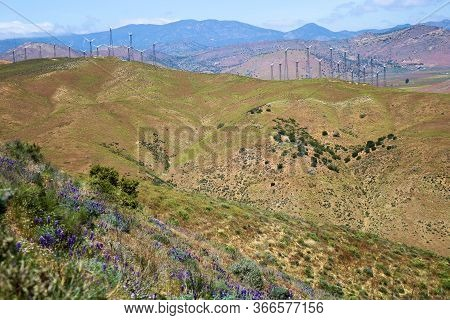 Rolling Hills With Lush Grasslands And Lupine Wildflowers During Spring Including Wind Turbines On T