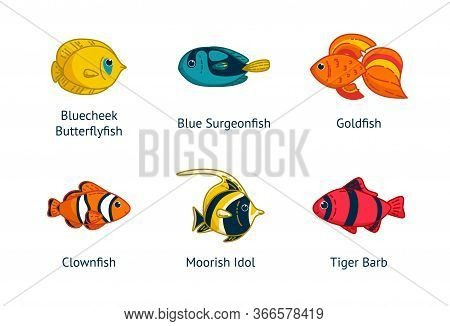 Set Of Six Tropical Fishes With Their Names. Clownfish, Goldfish, Butterflyfish An Others. Vector Il