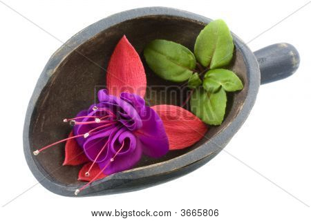 Fuchsia Flower In A Wooden Scoop
