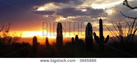 Sunset Of Saguaro Country
