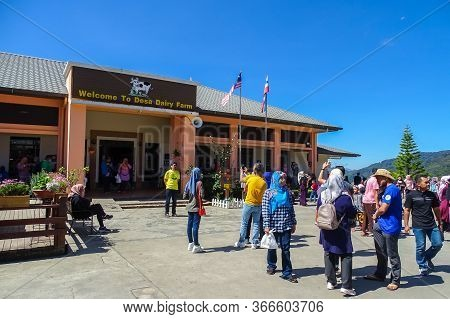 Ranau,sabah-mac 16,2020:people Visiting The Desa Cattle Dairy Farm Located At The Foot Of Mount Kina