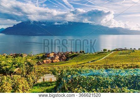 Lavaux, Switzerland: Little Town, Lake Geneva And The Swiss Alps Landscape Seen From Lavaux Vineyard