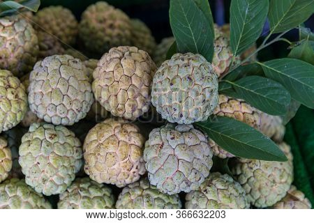 Custard Apple Fruit To Sell In Fresh Market. Annona Reticulata. Group Of Fresh Organic Green Custard
