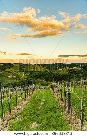 Vineyards In Steinbach, Leibnitz Area Famous Destination Wine Street Area South Styria , Wine Countr