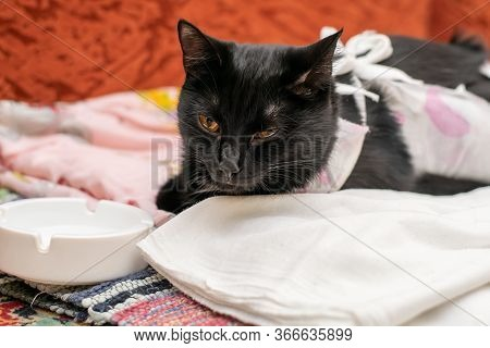 Black Sick Cat Lies At The Saucer, Dressed In A Bandage, A Blanket