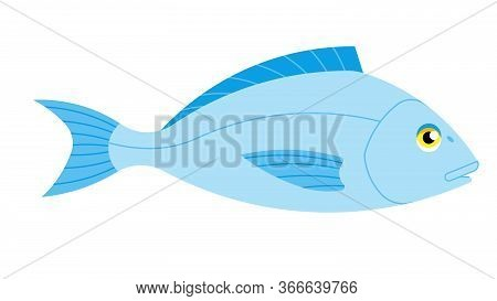 Dorado Fish On A White Background. Vector Illustration Of A Sea Creature.