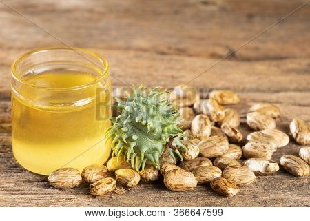 Seeds And Castor Oil - Ricinus Communis