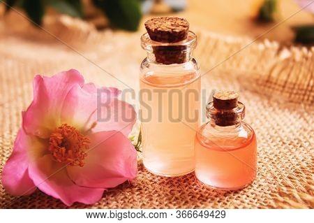 Rose Essential Oil Rosehip Selective Focus.nature Flowers