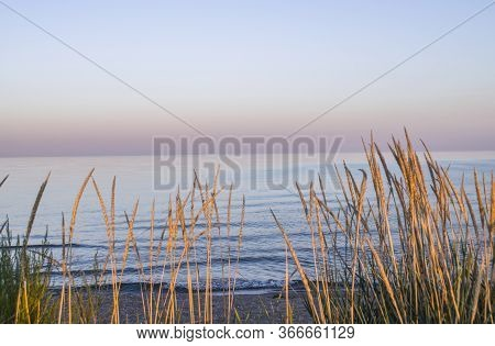 Sea Coast With Spikelets. Photo Of Evening Seascape. Summer Photo.