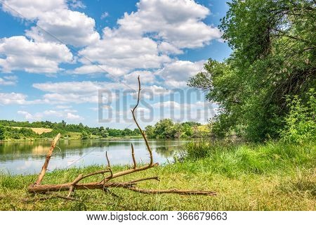 Dry Snag On A River Bank In Forest