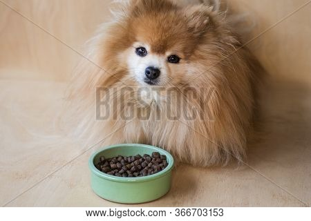 Pomeranian Spitz Is Eating. Pet Dry Food In A Ceramic Green Bowl On Pastel Blue Light Background Wit