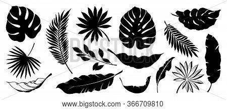 Set Of Tropical Leaves. Collection Black Leaves Palm, Fan Palm, Banana Leaves. Nature Leaves Collect