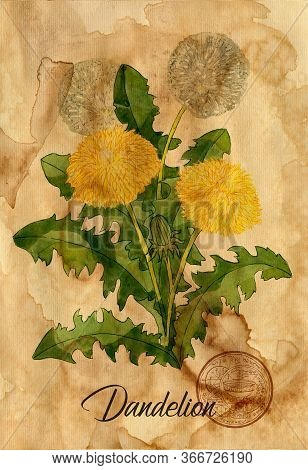 Dandelion Flower With Magic Seal On Old Paper Texture Background. Witch Healing Herbs Collection For