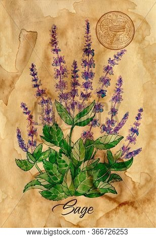 Garden Sage Flower With Magic Seal On Old Paper Texture Background. Witch Healing Herbs Collection F