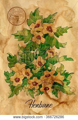 Henbane Flower With Magic Seal On Old Paper Texture Background. Witch Healing Herbs Collection For H