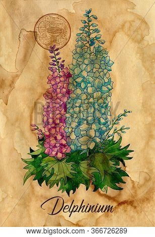 Delphinium Flower With Magic Seal On Old Paper Texture Background. Witch Healing Herbs Collection Fo