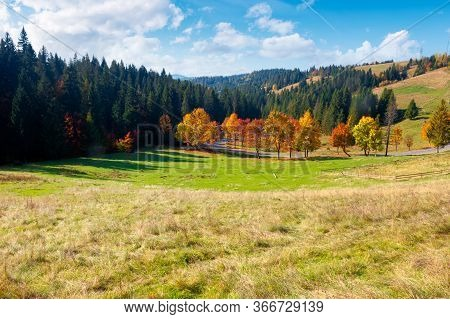 Forest In Red Foliage On Sunny Autumn Day. Trees With Branches With Red Foliage In Forest. Hillside