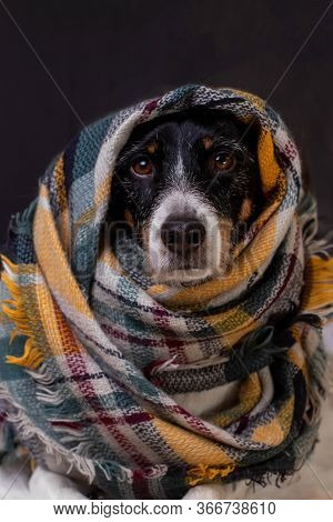 Beautiful Dog Posing With A Colorful Scarf